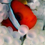 『志乃の癒し』Vol.3 久米島ダイビング旅行記 8月 海の世界