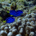 Okinawa · Kerama Islands · Kumejima DIVING travel record Vol.2/志乃の癒しダイビング