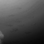 『志乃の癒し』伊豆下田 神子元ダイビング 弓ヶ浜&伊豆観光Vol.5 ハンマーヘッドシャーク
