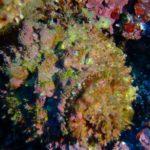 ダイビング・海の危険生物に注意