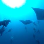 『志乃の癒し』360度カメラ4K 動画③ 南の島パラオダイビング旅行