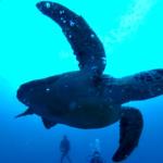 『志乃の癒し』360度カメラ4K 動画④ 南の島パラオダイビング旅行