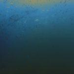視界ゼロの海でダイビング。